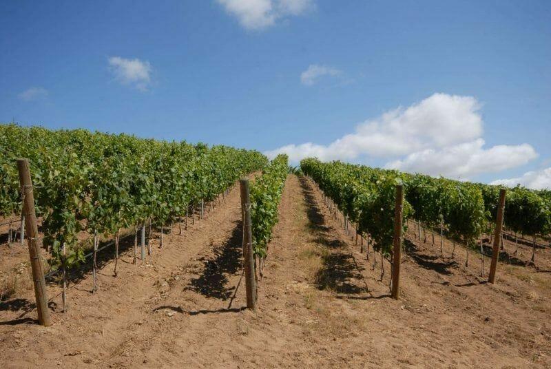 Sardinian wineries