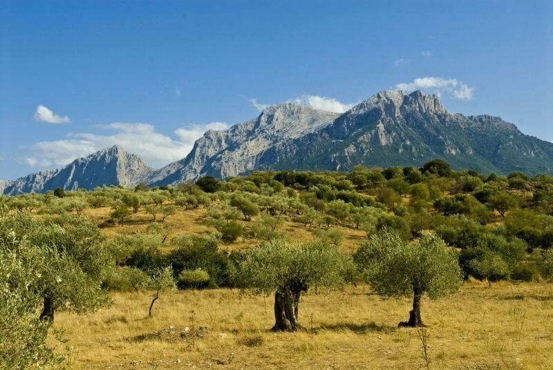 Highest Mountain in Sardinia