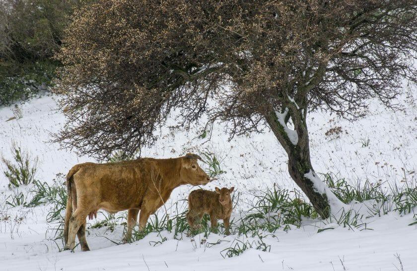 Sardinia in winter