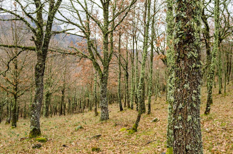 Fonni forests