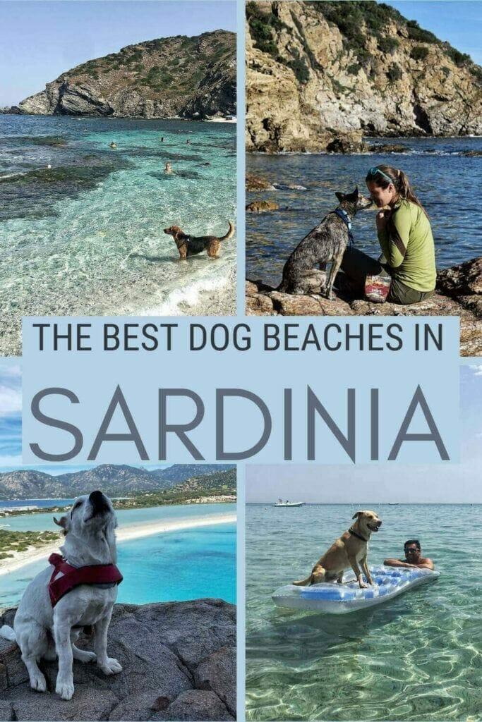 Check out the most dog-friendly beaches in Sardinia - via @c_tavani