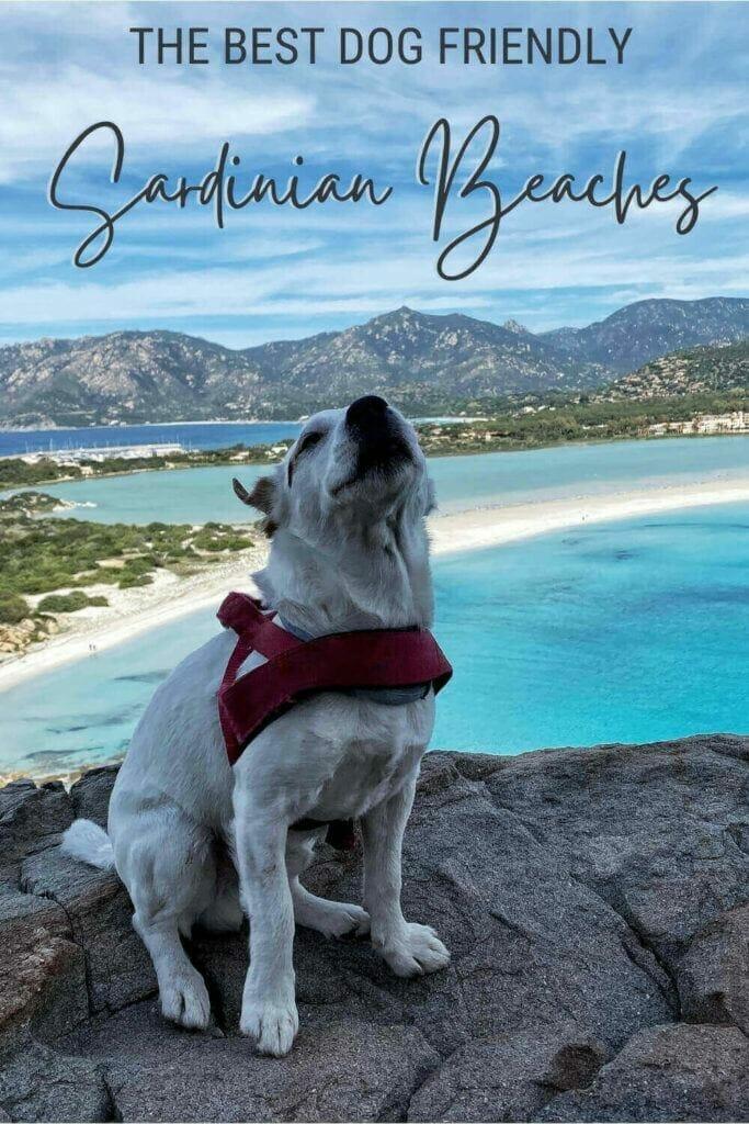 Discover the most dog friendly beaches in Sardinia - via @c_tavani
