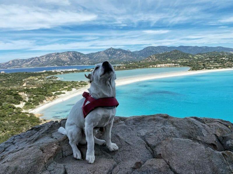 Dog friendly Beaches In Sardinia
